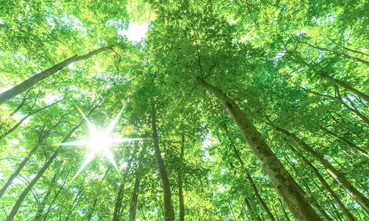 姫路市で木の家・自然素材へのこだわり②